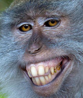 monkeyprivatise
