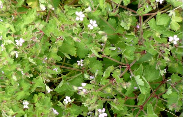 woldflowers