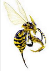 waspipicbfly